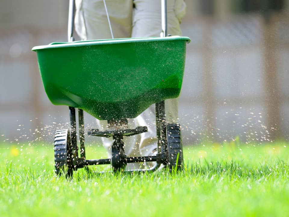 Lawncare in Thaxted Essex